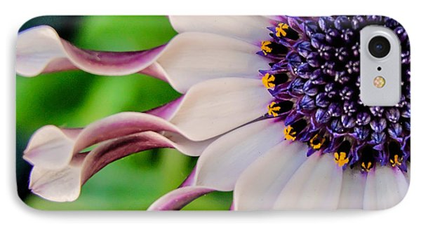 African Daisy Squared IPhone Case by TK Goforth