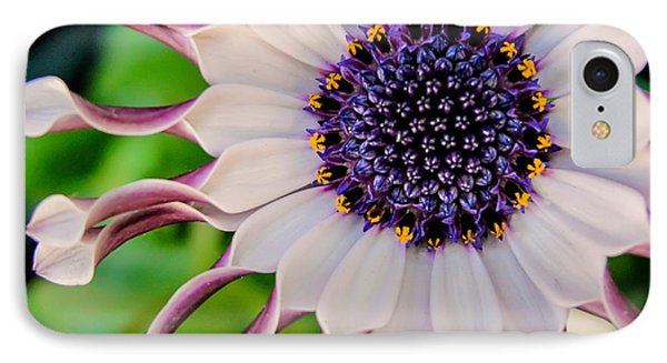 African Daisy IPhone Case by TK Goforth
