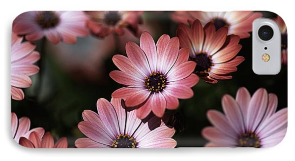 African Daisy Zion Red IPhone Case