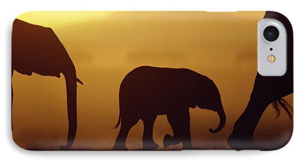 African Elephant Loxodonta Africana Phone Case by Karl Ammann