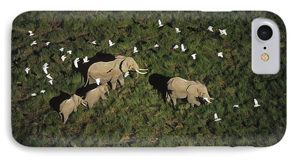 African Elephant Parents And Two Calves IPhone Case by Tim Fitzharris