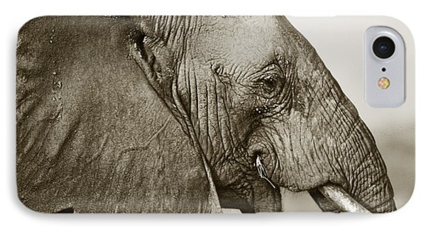 African Elephant Profile  Duotoned IPhone Case by Liz Leyden