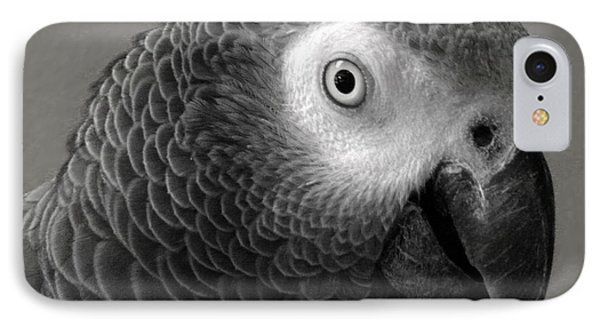 African Gray IPhone Case by Sandi OReilly
