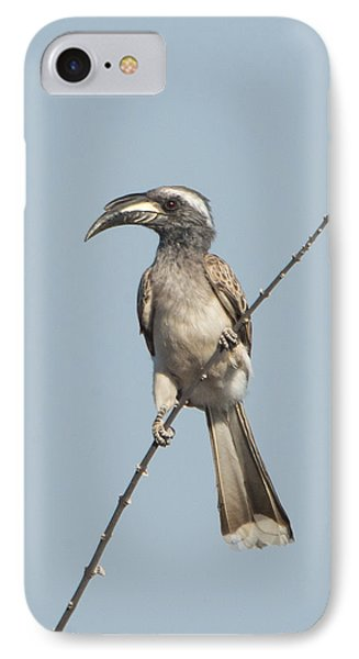 Hornbill iPhone 7 Case - African Grey Hornbill Tockus Nasutus by Panoramic Images