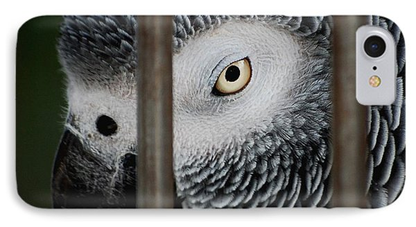 African Grey IPhone Case by Robert Meanor