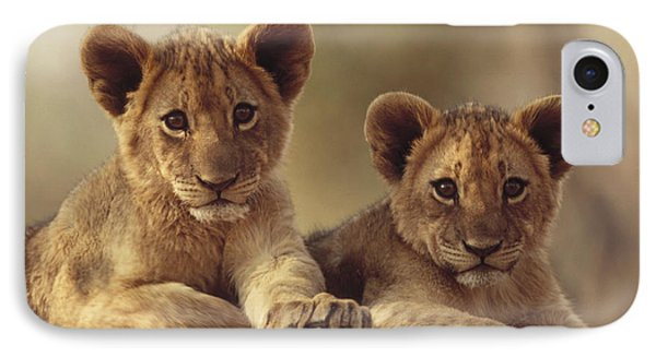 African Lion Cubs Resting On A Rock Phone Case by Tim Fitzharris