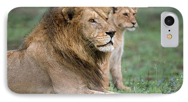 African Lion Panthera Leo With Its Cub IPhone Case by Panoramic Images