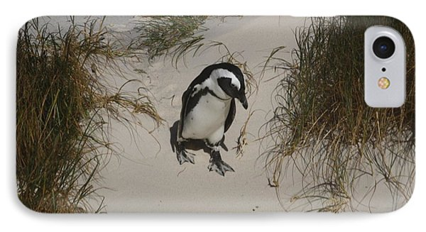 African Penguin On A Mission IPhone Case by Bev Conover