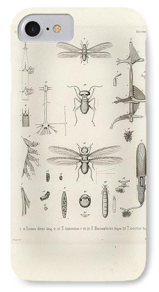 African Termites And Their Anatomy IPhone Case by W Wagenschieber
