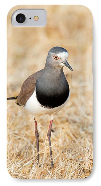 African Wattled Lapwing Vanellus IPhone 7 Case by Panoramic Images