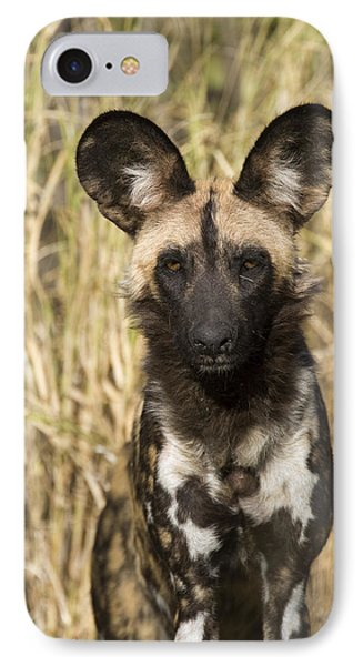 African Wild Dog Okavango Delta Botswana IPhone Case