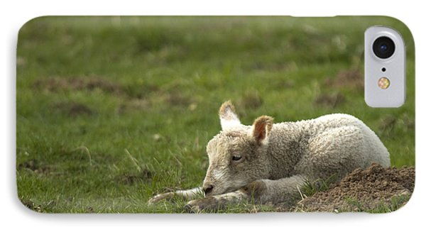 Sheep iPhone 7 Case - Afternoon Nap by Angel Ciesniarska
