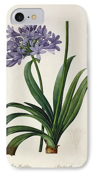 Agapanthus Umbrellatus IPhone Case by Pierre Redoute