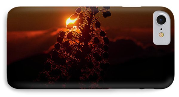 IPhone Case featuring the photograph Ahinahina - Silversword - Argyroxiphium Sandwicense - Sunrise by Sharon Mau