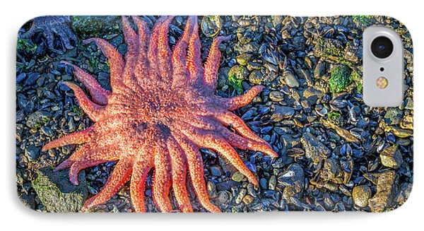 Alaska Starfish IPhone Case by Wild Montana Images