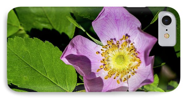 IPhone Case featuring the photograph Alberta Wild Rose Opens For Early Sun by Darcy Michaelchuk
