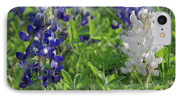 Albino And Blue Bluebonnet IPhone Case by Robyn Stacey