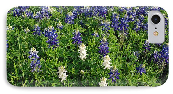Albino And Bluebonnet Field IPhone Case by Robyn Stacey