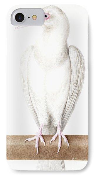 Albino Crow IPhone Case by Nicolas Robert