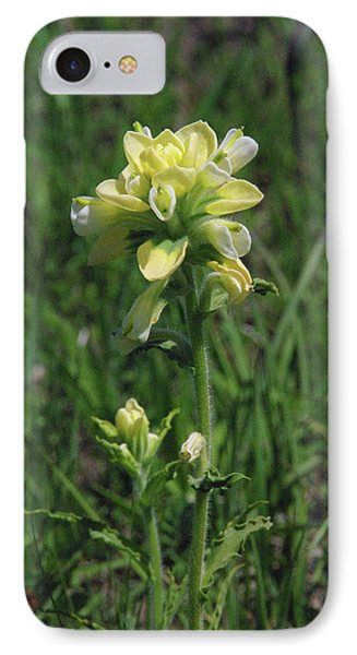 Albino Texas Paintbrush IPhone Case