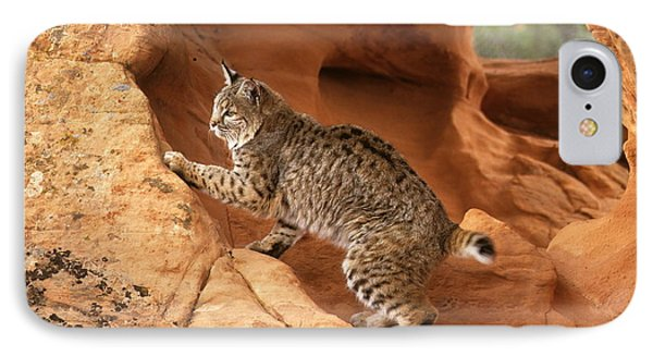 Alert Bobcat Phone Case by Larry Allan