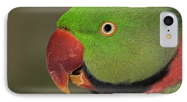 IPhone Case featuring the photograph Alexandrine Parakeet by JT Lewis