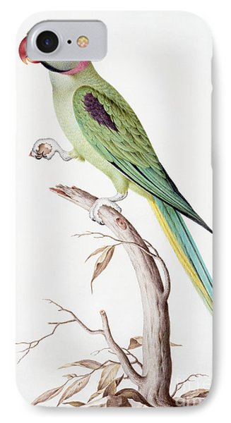 Parakeet iPhone 7 Case - Alexandrine Parakeet by Nicolas Robert