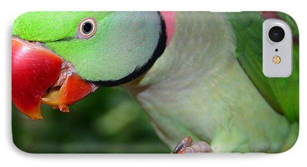 Alexandrine Parrot Feeding IPhone Case by Ralph A  Ledergerber-Photography