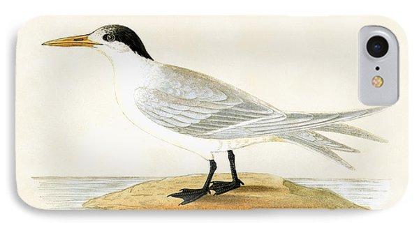 Allied Tern IPhone Case by English School