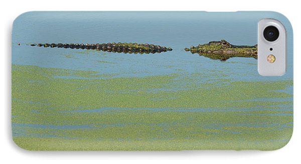 Alligator  IPhone Case by Carolyn Dalessandro