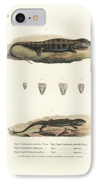 Alligator Lizards From Mexico IPhone Case by Friedrich August Schmidt