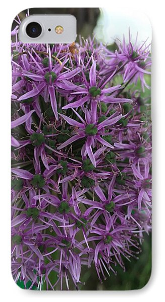 Allium Stars  IPhone Case by Kathy Spall