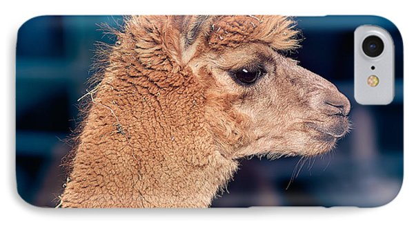 Alpaca Wants To Meet You IPhone Case by TC Morgan