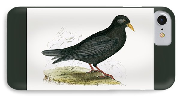 Alpine Chough IPhone Case by English School