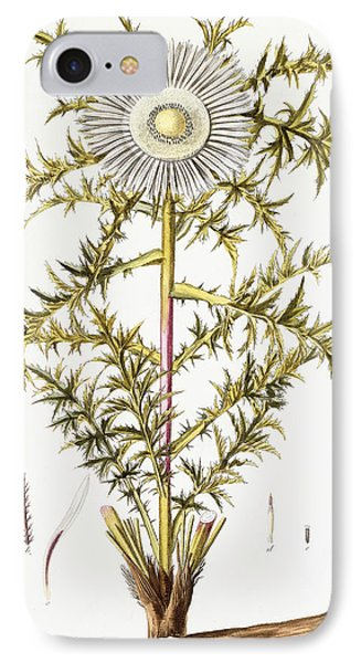 Alpine Thistle IPhone Case by Austrian School
