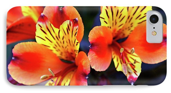 IPhone Case featuring the photograph Alstroemeria Indian Summer by Baggieoldboy