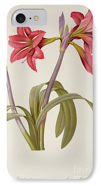 Amaryllis Brasiliensis IPhone Case by Pierre Redoute