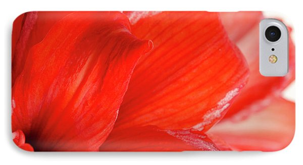 Amaryllis Fade Red Amaryllis Flower Subtly Fading Into A White Background Phone Case by Andy Smy