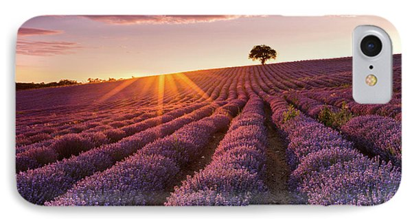 Amazing Lavender Field At Sunset Phone Case by Evgeni Dinev