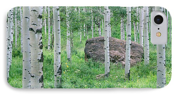 American Aspen Trees In The Forest IPhone Case by Panoramic Images
