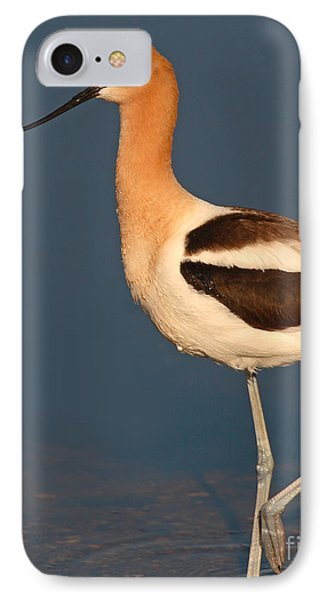 American Avocet Standing Tall Phone Case by Max Allen