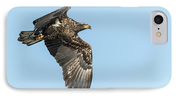 IPhone Case featuring the photograph American Bald Eagle 2017-17 by Thomas Young