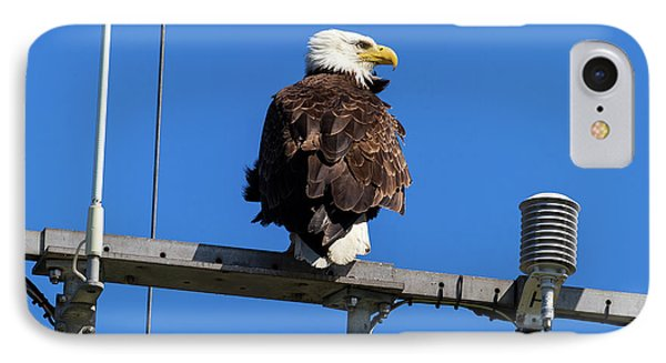American Bald Eagle On Communication Tower Phone Case by David Gn