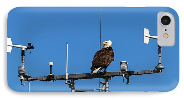 American Bald Eagle Perched On Communication Tower Phone Case by David Gn