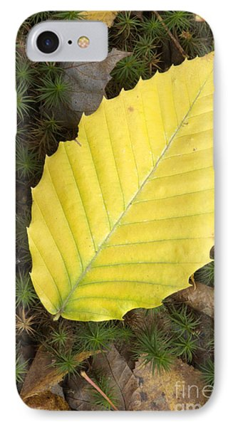 American Beech Leaf Phone Case by Erin Paul Donovan