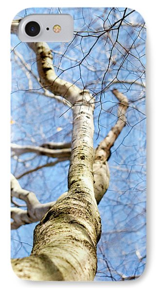 IPhone Case featuring the photograph American Beech Tree by Christina Rollo