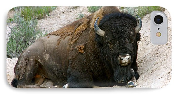 American Bison Phone Case by Karon Melillo DeVega