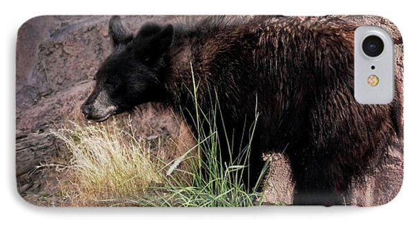 American Black Bear Cub IPhone Case by Elaine Malott