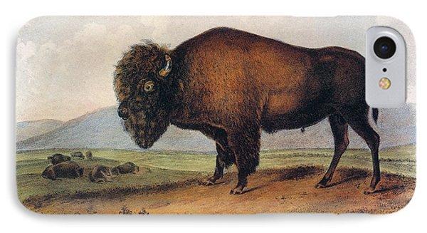 American Buffalo, 1846 IPhone Case