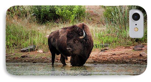 American Bull Bison Creekside IPhone Case
